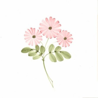 Rye Pottery Hand-painted Flower Tiles Classic Daisy