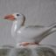 Rye Pottery Hand made and painted Ceramic Animal Figures THe Quirky Turtle Dish with a seagull perched on the back to serve as the lid